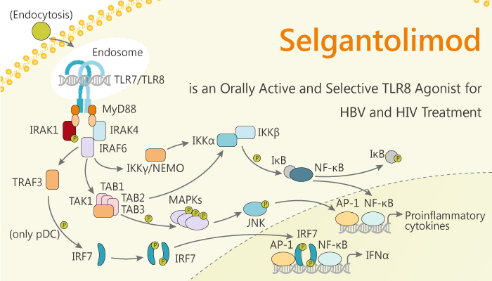 Selgantolimod is an Orally Active and Selectiv TLR8 Agonist for HBV and HIV for Treatment 2019 12 29 - Selgantolimod is an Orally Active and Selective TLR8 Agonist for HBV and HIV for Treatment