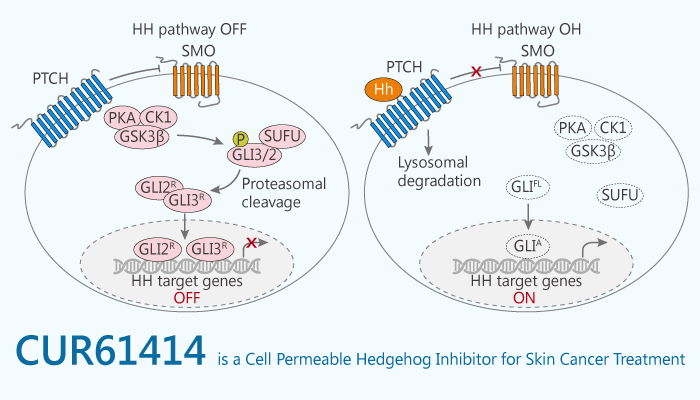 CUR61414 is a Cell Permeable Hedgehog Inhibitor for Skin Cancer Treatment 2020 01 09 - CUR61414 is a Cell Permeable Hedgehog Inhibitor for Skin Cancer Treatment