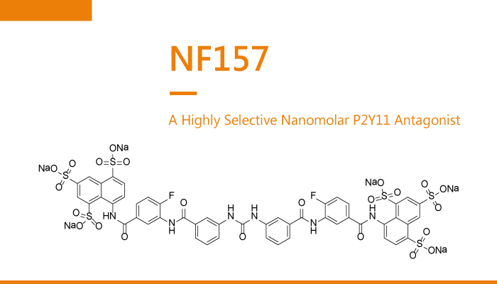 NF157 is a Highly Selective Nanomolar P2Y11 Antagonist 2020 02 04 - NF157 is a Highly Selective Nanomolar P2Y11 Antagonist