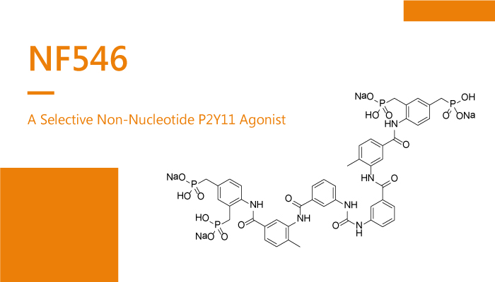 NF546 is a Selective Non Nucleotide P2Y11 Agonist 2020 02 02 - NF546 is a Selective Non-Nucleotide P2Y11 Agonist