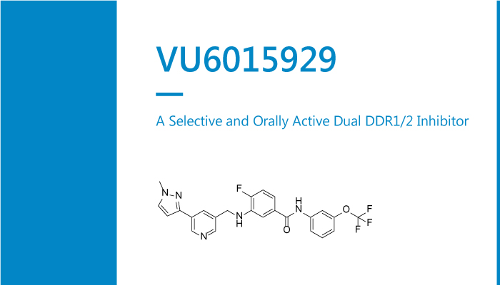 VU6015929 is a Selective and Orally Active Dual DDR12 Inhibitor 2020 01 19 - VU6015929 is a Selective and Orally Active Dual DDR1/2 Inhibitor