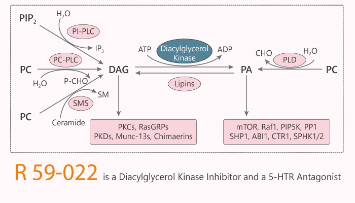 R 59 022 is a Diacylglycerol Kinase Inhibitor and a 5 HTR Antagonist 2020 02 26 - R 59-022 is a Diacylglycerol Kinase Inhibitor and a 5-HTR Antagonist
