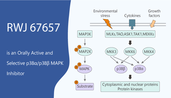 RWJ 67657 is an Orally Active and Selective p38α and p38β MAPK Inhibitor 2020 02 28 - RWJ 67657 is an Orally Active and Selective p38α and p38β MAPK Inhibitor
