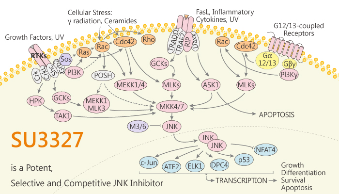 SU3327 is a Potent Selective and Competitive JNK Inhibitor 2020 03 25 - SU3327 is a Potent, Selective and Competitive JNK Inhibitor