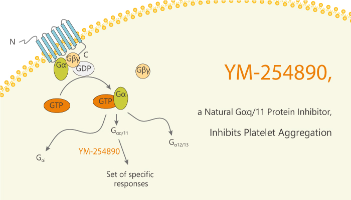 YM 254890 a Natural Gq11 Protein Inhibitor Inhibits Platelet Aggregation 2020 03 04 - YM-254890, a Natural Gq/11 Protein Inhibitor, Inhibits Platelet Aggregation