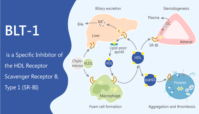 BLT 1 is a Specific Inhibitor of the HDL Receptor Scavenger Receptor B Type 1 SR BI 2020 04 04 - BLT-1 is a Specific Inhibitor of the HDL Receptor Scavenger Receptor B, Type 1 (SR-BI)