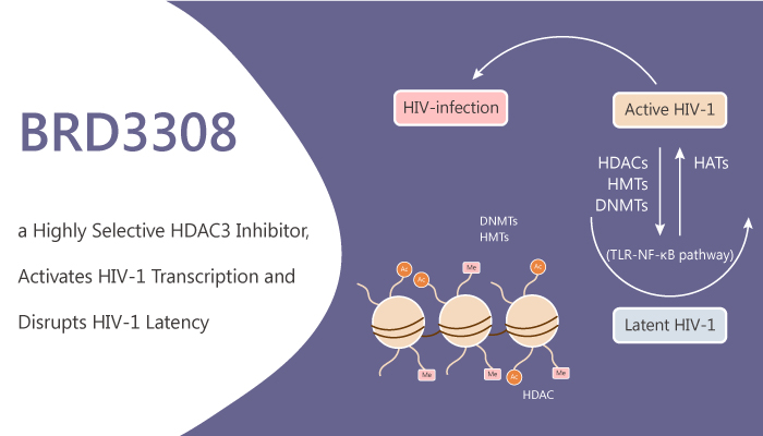 BRD3308 a Highly Selective HDAC3 Inhibitor Activates HIV 1 Transcription and Disrupts HIV 1 Latency 2020 05 02 - BRD3308, a Highly Selective HDAC3 Inhibitor, Activates HIV-1 Transcription and Disrupts HIV-1 Latency