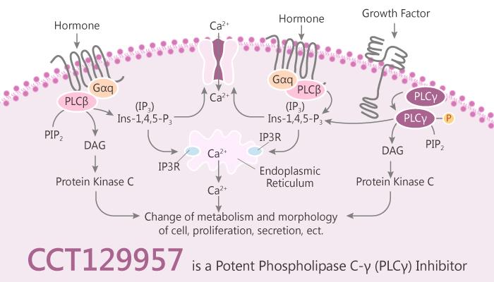 CCT129957 is a Potent Phospholipase C γ PLC γ Inhibitor 2020 04 02 - CCT129957 is a Potent Phospholipase C-γ (PLC-γ) Inhibitor
