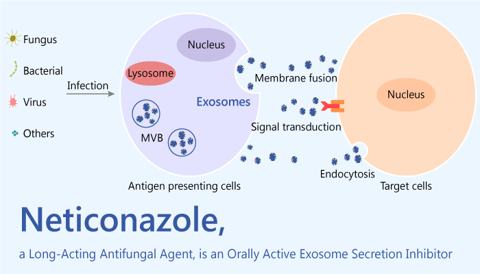 Neticonazole is a Long Acting Antifungal Agent and an Orally Active Exosome Secretion Inhibitor 2020 04 09 - Neticonazole is a Long-Acting Antifungal Agent and an Orally Active Exosome Secretion Inhibitor