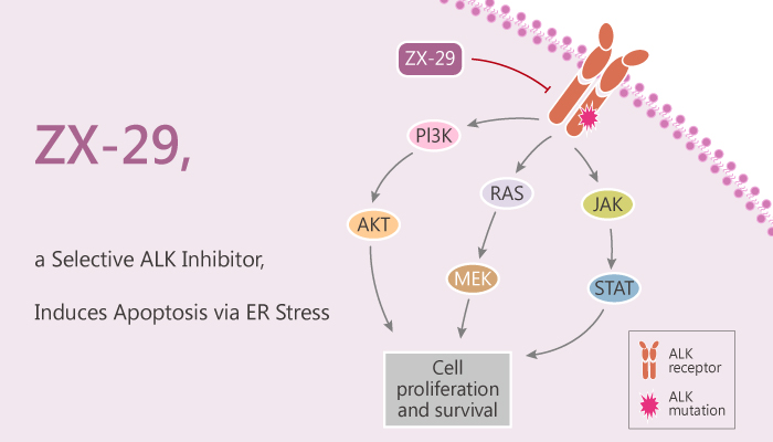 ZX 29 a Selective ALK Inhibitor Induces Apoptosis via ER Stress 2020 04 16 - ZX-29, a Selective ALK Inhibitor, Induces Apoptosis via ER Stress