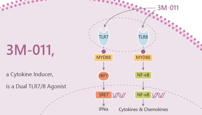 3M 011 a Cytokine Inducer is a Dual TLR7 8 Agonist 2020 05 09 - 3M-011, a Cytokine Inducer, is a Dual TLR7/8 Agonist