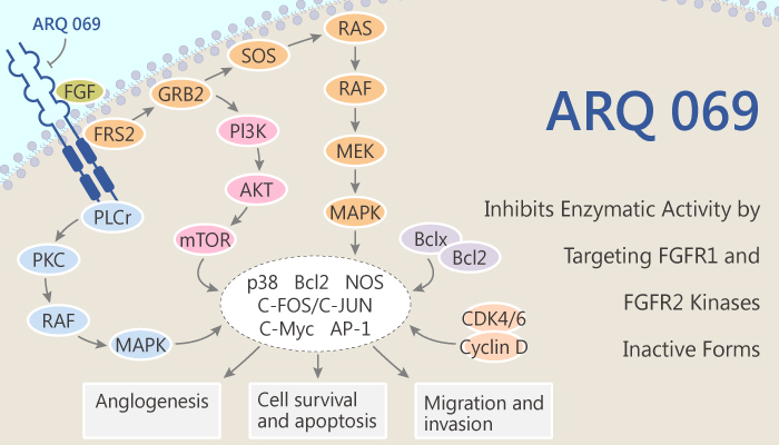 ARQ 069 Inhibits Enzymatic Activity by Targeting FGFR1 and FGFR2 Kinases Inactive Forms 2020 05 19 - ARQ 069 Inhibits Enzymatic Activity by Targeting FGFR1 and FGFR2 Kinases Inactive Forms