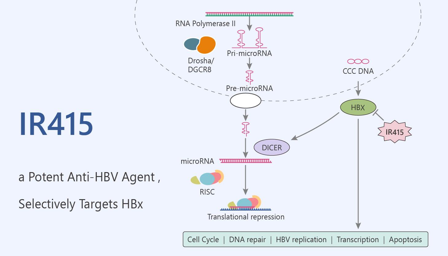 IR415 a potent Anti HBV Agent Selectively Targets HBx 2020 05 20 - IR415, a Potent Anti-HBV Agent , Selectively Targets HBx