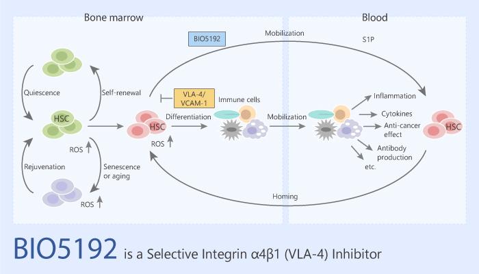 BIO5192 is a Selective Integrin α4β1 VLA 4 Inhibitor 2020 06 13 - BIO5192 is a Selective Integrin α4β1 (VLA-4) Inhibitor
