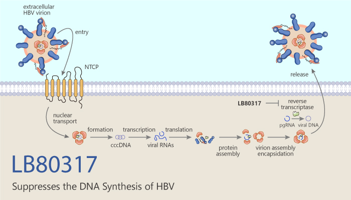 LB80317 Suppresses the DNA Synthesis of HBV 2020 06 18 - LB80317 Suppresses the DNA Synthesis of HBV