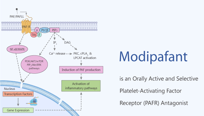 Modipafant is an Orally Active and Selective Platelet Activating Factor PAF Antagonist 2020 07 08 - Modipafant is an Orally Active and Selective Platelet-Activating Factor (PAF) Antagonist