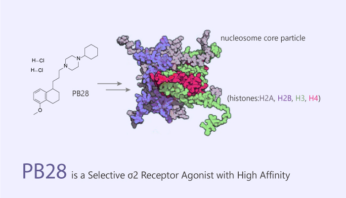 PB28 is a Selective σ2 Receptor Agonist with High Affinity 2020 06 30 - PB28 is a Selective σ2 Receptor Agonist with High Affinity