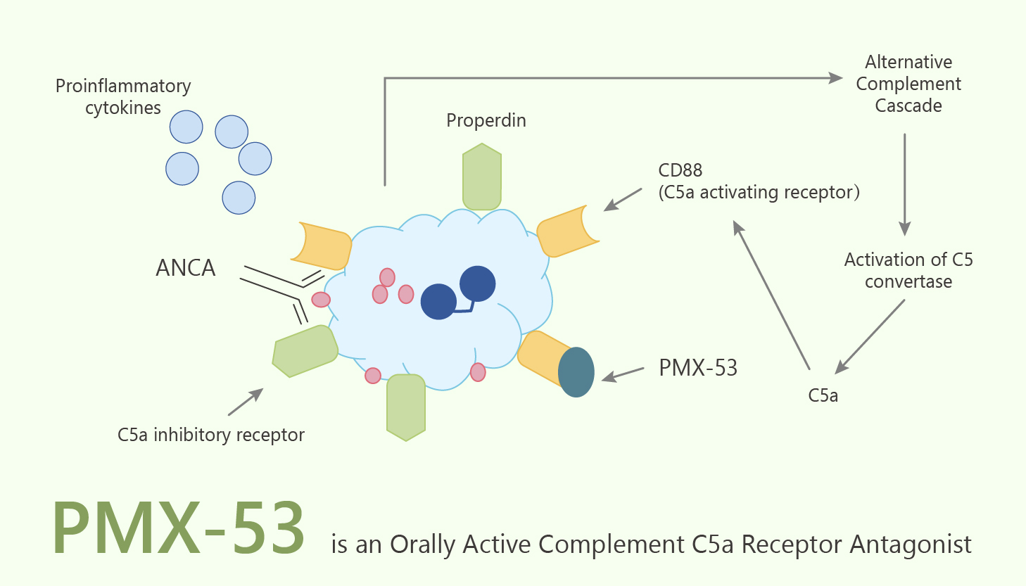 PMX 53 is an Orally Active Complement C5a Receptor Antagonist 2020 06 09 - PMX-53 is an Orally Active Complement C5a Receptor Antagonist