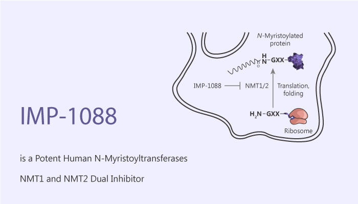 IMP 1088 is a Potent Human N Myristoyltransferases NMT1 and NMT2 Dual Inhibitor 2020 07 04 - IMP-1088 is a Potent Human N-Myristoyltransferases NMT1 and NMT2 Dual Inhibitor