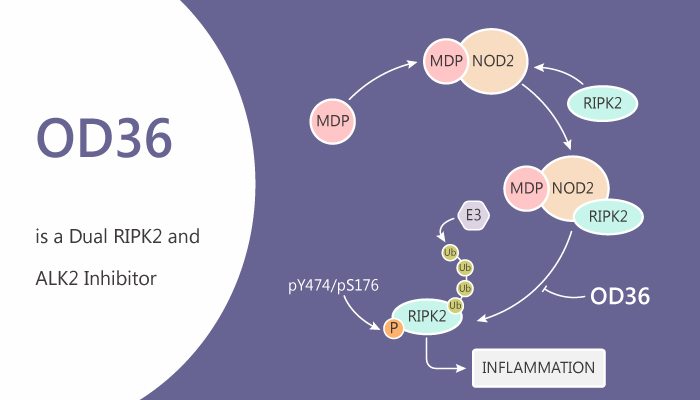 OD36 is a Dual RIPK2 and ALK2 Inhibitor 2020 07 23 - OD36 is a Dual RIPK2 and ALK2 Inhibitor