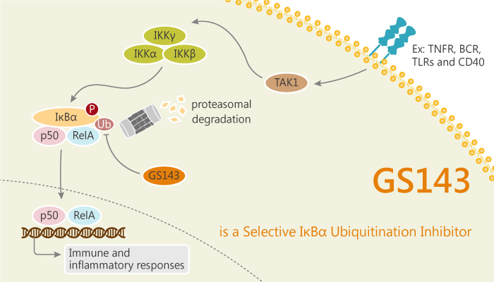 GS143 is a Selective IκBα Ubiquitination Inhibitor 2020 09 02 - GS143 is a Selec­tive IκBα Ubiquitination Inhibitor