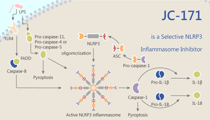 JC 171 is a Selective NLRP3 Inflammasome Inhibitor 2020 08 05 - JC-171 is a Selective NLRP3 Inflammasome Inhibitor