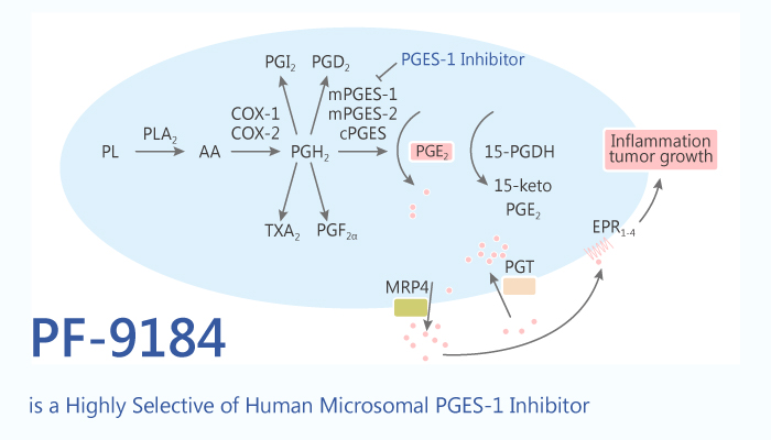 PF 9184 is a Highly Selective of Human Microsomal PGES 1 Inhibitor 2020 08 04 - PF-9184 is a Highly Selective of Human Microsomal PGES-1 Inhibitor