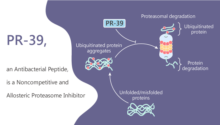 PR 39 an Antibacterial Peptide is a Noncompetitive and Allosteric Proteasome Inhibitor 2020 08 26 - PR-39, an Antibacterial Peptide, is a Noncompetitive and Allosteric Proteasome Inhibitor