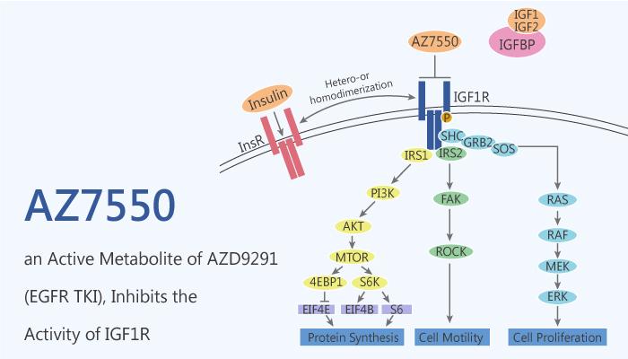 AZ7550 an Active Metabolite of AZD9291 EGFR TKI Inhibits the Activity of IGF1R 2020 10 10 - AZ7550, an Active Metabolite of AZD9291 (EGFR TKI), Inhibits the Activity of IGF1R