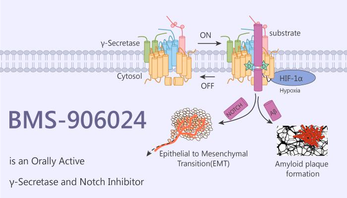 BMS 906024 is an Orally Active γ Secretase and Notch Inhibitor 2020 09 23 - BMS-906024 is an Orally Active γ-Secretase and Notch Inhibitor