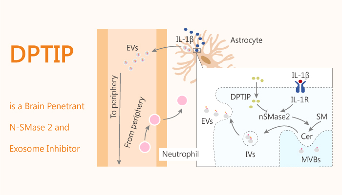 DPTIP is a Brain Penetrant N SMase 2 and Exosome Inhibitor 2020 09 12 - DPTIP is a Brain Penetrant N-SMase 2 and Exosome Inhibitor