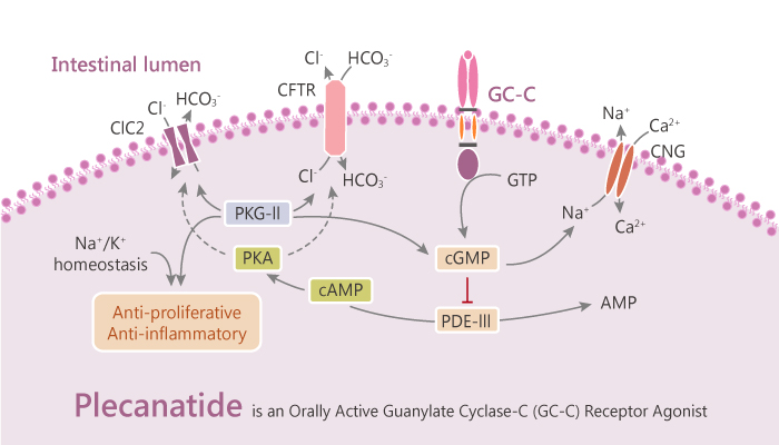 Plecanatide is an Orally Active Guanylate Cyclase C GC C Receptor Agonist 2020 09 25 - Plecanatide is an Orally Active Guanylate Cyclase-C (GC-C) Receptor Agonist