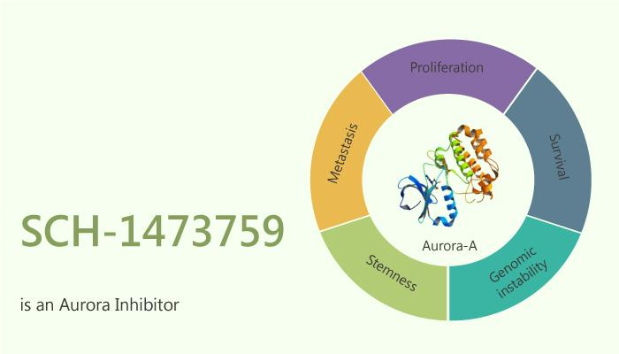 SCH 1473759 is an Aurora Inhibitor 2020 10 03 - SCH-1473759 is an Aurora Inhibitor