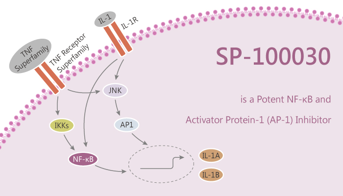 SP 100030 is a Potent NF κB and Activator Protein 1 AP 1 Inhibitor 2020 10 01 - SP-100030 is a Potent NF-κB and Activator Protein-1 (AP-1) Inhibitor