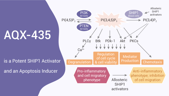 AQX 435 is a Potent SHIP1 Activator and an Apoptosis Inducer 2020 10 28 - AQX-435 is a Potent SHIP1 Activator and an Apoptosis Inducer