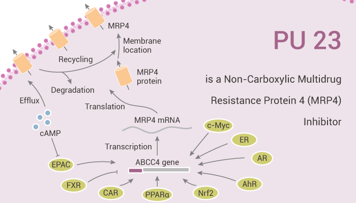 PU 23 is a Non Carboxylic Multidrug Resistance Protein 4 MRP4 Inhibitor 2020 10 22 - PU 23 is a Non-Carboxylic Multidrug Resistance Protein 4 (MRP4) Inhibitor