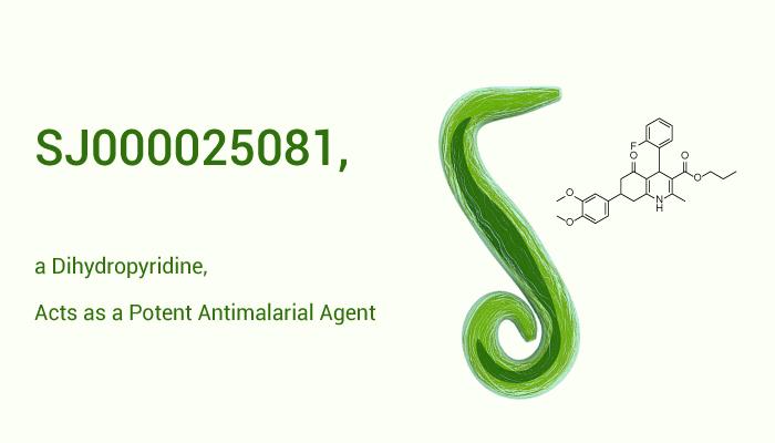 SJ000025081 a Dihydropyridine Acts as a Potent Antimalarial Agent 2020 10 17 - SJ000025081, a Dihydropyridine, Acts as a Potent Antimalarial Agent