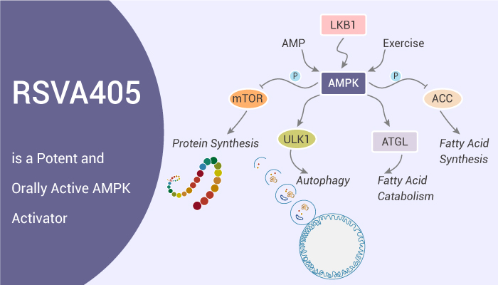 RSVA405 is a Potent and Orally Active AMPK Activator 2020 11 21 - RSVA405 is a Potent and Orally Active AMPK Activator