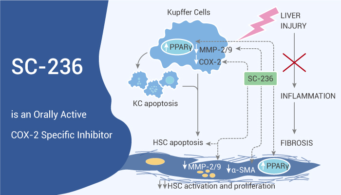 SC 236 is an Orally Active COX 2 Specific Inhibitor 2020 11 24 - SC-236 is an Orally Active COX-2 Specific Inhibitor