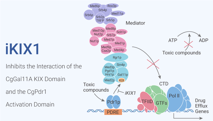 iKIX1 Inhibits the Interaction of the CgGal11A KIX Domain and the CgPdr1 Activation Domain 2020 11 10 - iKIX1 Inhibits the Interaction of the CgGal11A KIX Domain and the CgPdr1 Activation Domain