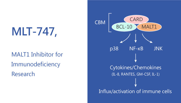 MLT 747 Allosteric MALT1 Inhibitor for Immunodeficiency Research 2019 05 11 - MLT-747, an Allosteric MALT1 Inhibitor for Immunodeficiency Research