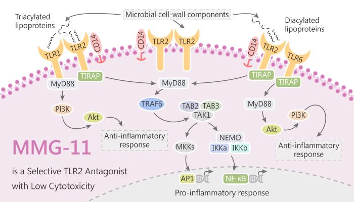 MMG 11 is a Selective TLR2 Antagonist with Low Cytotoxicity 2019 07 20 - MMG-11 is a Selective TLR2 Antagonist with Low Cytotoxicity